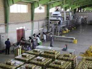 کارخانه کشمش تاکستان