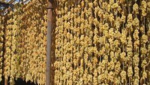 کشمش انگوری ملکان