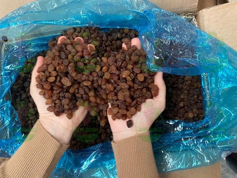 صادرات کشمش قزوین